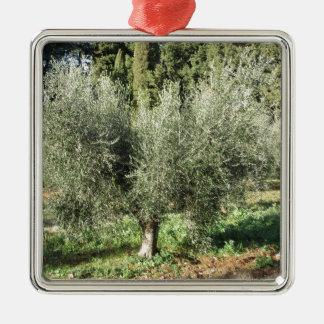 Olijfbomen in een zonnige dag. Toscanië, Italië Zilverkleurig Vierkant Ornament