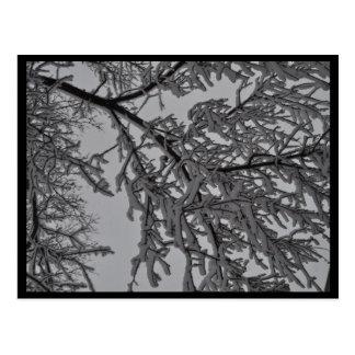 Onder de Bomen Briefkaart