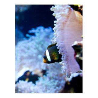 Onderwater achtergrond briefkaart