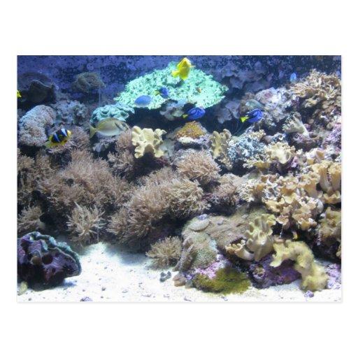 onderwater fotografie kleurrijke tropische visse