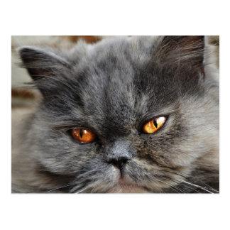 Ongestoord kattenbriefkaart briefkaart