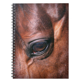 oog van paard ringband notitieboek