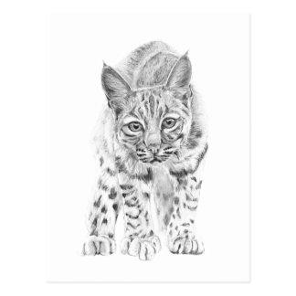 Op Prowl een Jonge Bobcat Briefkaart