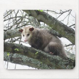 Opossum in een Boom Muismat