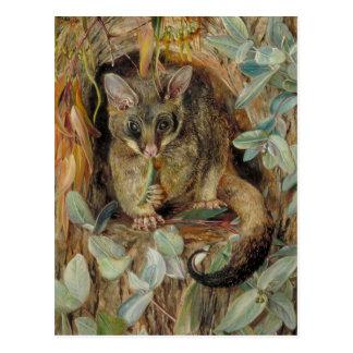 Opossum omhoog een Gomboom door Marianne North Briefkaart