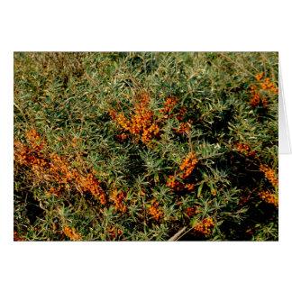 oranje bessen wenskaart