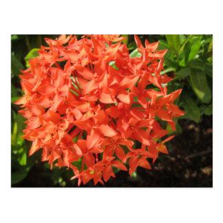 Oranje Bloem Ixora Briefkaart
