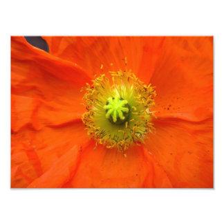 Oranje de fotodruk van de papaverbloem fotoafdrukken