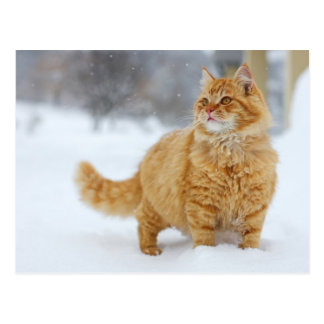Oranje Gestreepte kat in de sneeuw Briefkaart