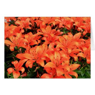 Oranje liliums in bloei briefkaarten 0