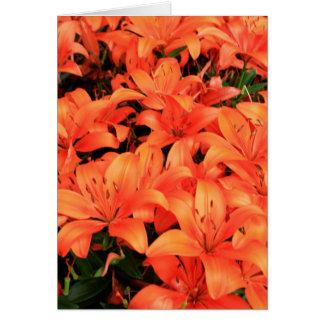 Oranje liliums in bloei kaart