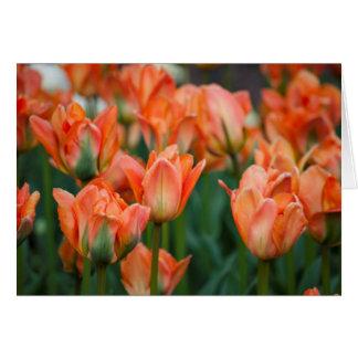Oranje tulpen leeg wenskaart