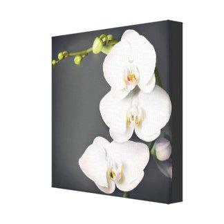 Orchidaceae (witte orchideeën) canvas print