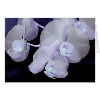 orchidee bloei wenskaart