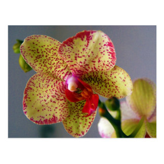 Orchidee Briefkaart