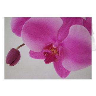 Orchidee en Knop Kaart