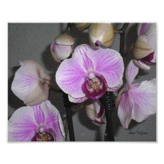 foto orchidee bull 52 - photo #41