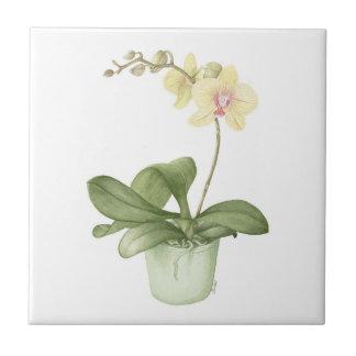 Orchidee in een Groene Botanische Ceramiektegel Tegeltje
