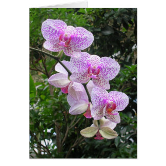 Orchidee Kaart