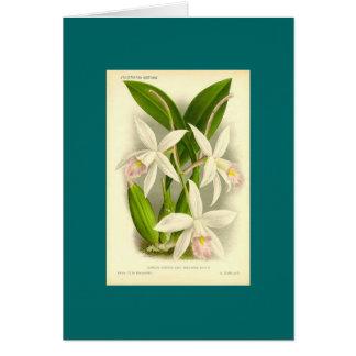 Orchidee - Laelia Anceps Wenskaart