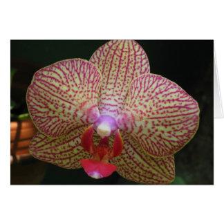 Orchidee Notecard Kaart