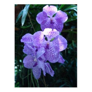 Orchideeën Briefkaart