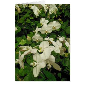 Orchideeën en Anthuriums Kaart