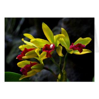 Orchideeën Kaart