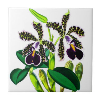 Orchideeën Keramisch Tegeltje