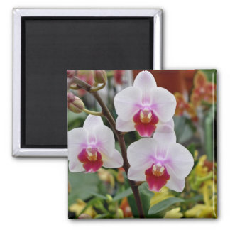 Orchideeën Magneet