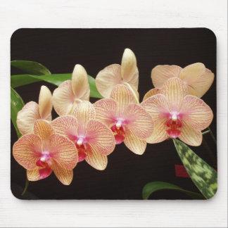 Orchideeën! Muismat