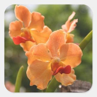 Orchideeën Vierkante Sticker