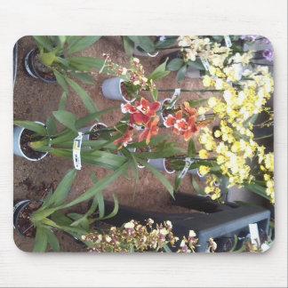 Orchideeën voor verkoop muismatten