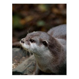 Otter Briefkaart
