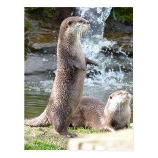 Otters die van de zon genieten briefkaart