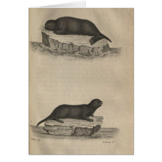 Otters Notitiekaart