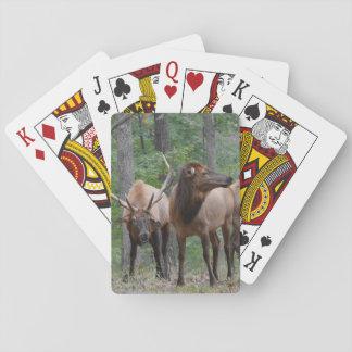 Overheers de Elanden van de Stier in het Pokerkaarten
