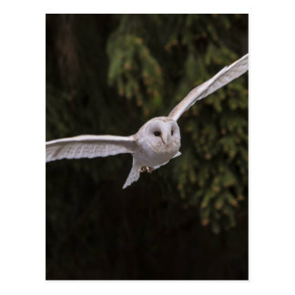 Owl flying through the woods briefkaart