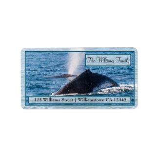 Paar Adresetiket van de Walvissen van de Etiket