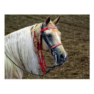 Paard 662 briefkaart