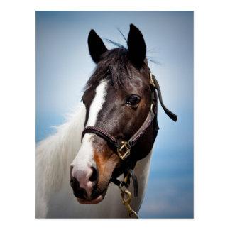 Paard Briefkaart