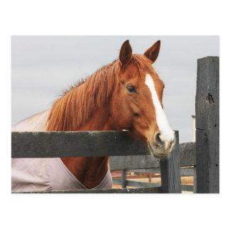 Paard in een Deken bij de Hoek van de Omheining Briefkaart