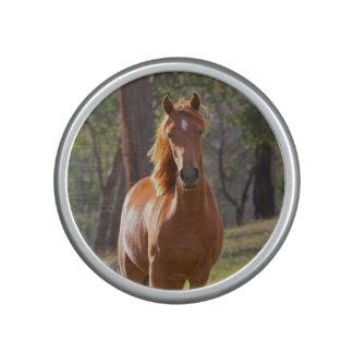 Paard in het Bos Bluetooth Luidspreker