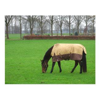 Paard in het Briefkaart van de Weide