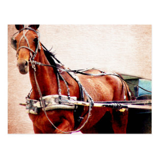 Paard met fouten briefkaart