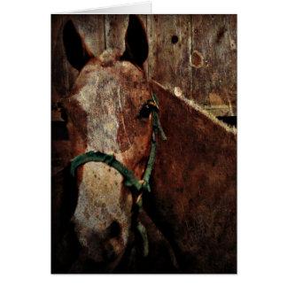 Paard, Vaderdag Wenskaart