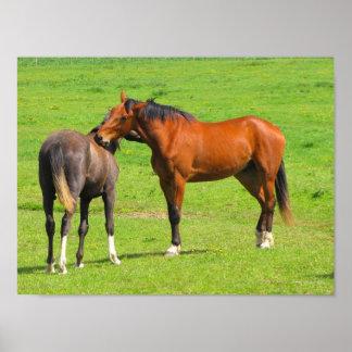 Paarden in de Druk van het Poster van de Weide