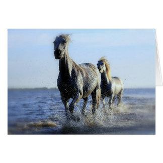 Paarden op het Strand Briefkaarten 0
