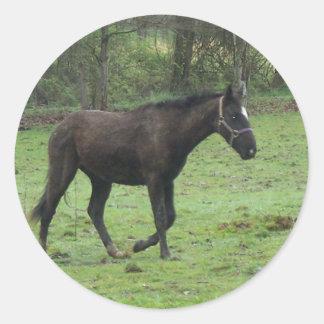 Paarden! Ronde Sticker