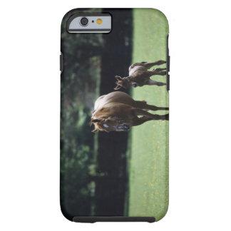 Paarden - Volbloed, Merrie en Veulen, Tough iPhone 6 Hoesje
